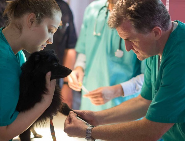 Veterinarians working with a dog.